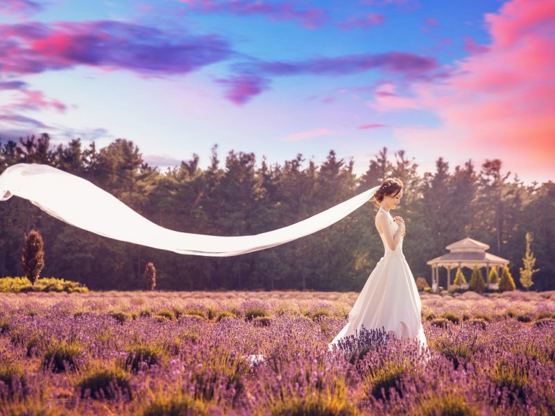 lavender-farm-toronto-photos