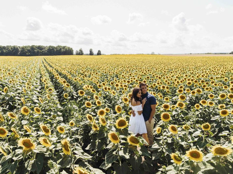sunflower farm engagement photos