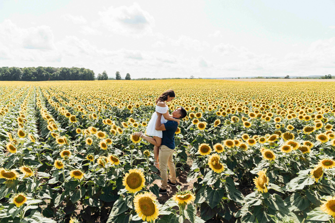 sunflower farm photos